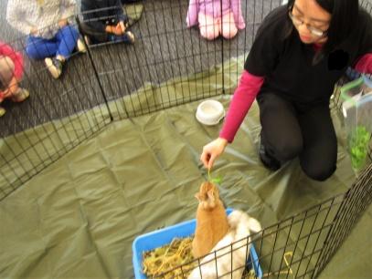 feeding bunnies